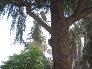 Tree Cam